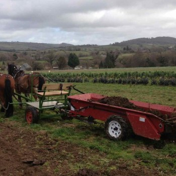 Model 37 in harness at Chagford Farm
